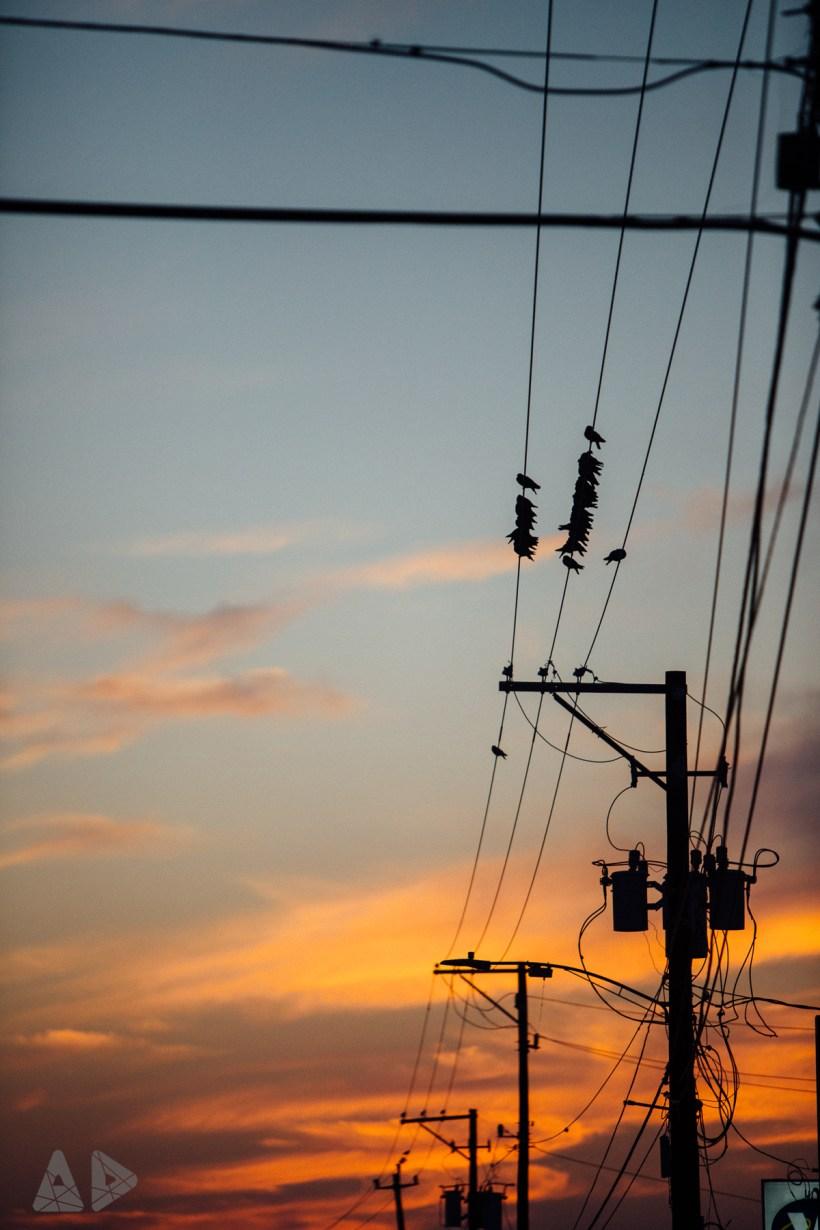 Birds-on-wire.jpg