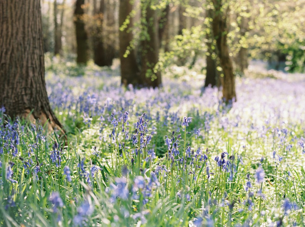 Bluebell Blues