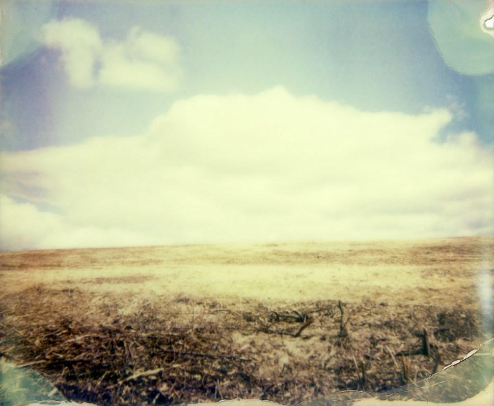 painterly field two by nikki gardner