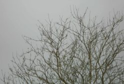 Watching, waiting. The tree doesn't mind the gloom or the rain as far as I can tell.