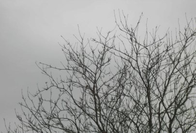 Grey and chilly