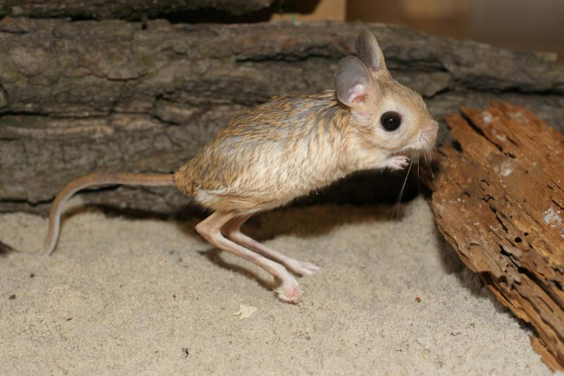 20 Strange And Creepy Creatures You Probably Haven't Heard About - ViewKick