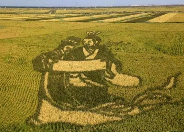 A crop art in China's rice field