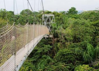 Erosion may wipe off Lekki Conservation Centre – DG