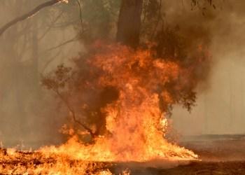 State of emergency as bushfires rage in Australia