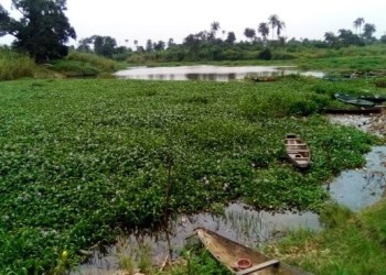 Evironmentalists, residents lament threat of water hyacinth on Epie Creek, Yenagoa