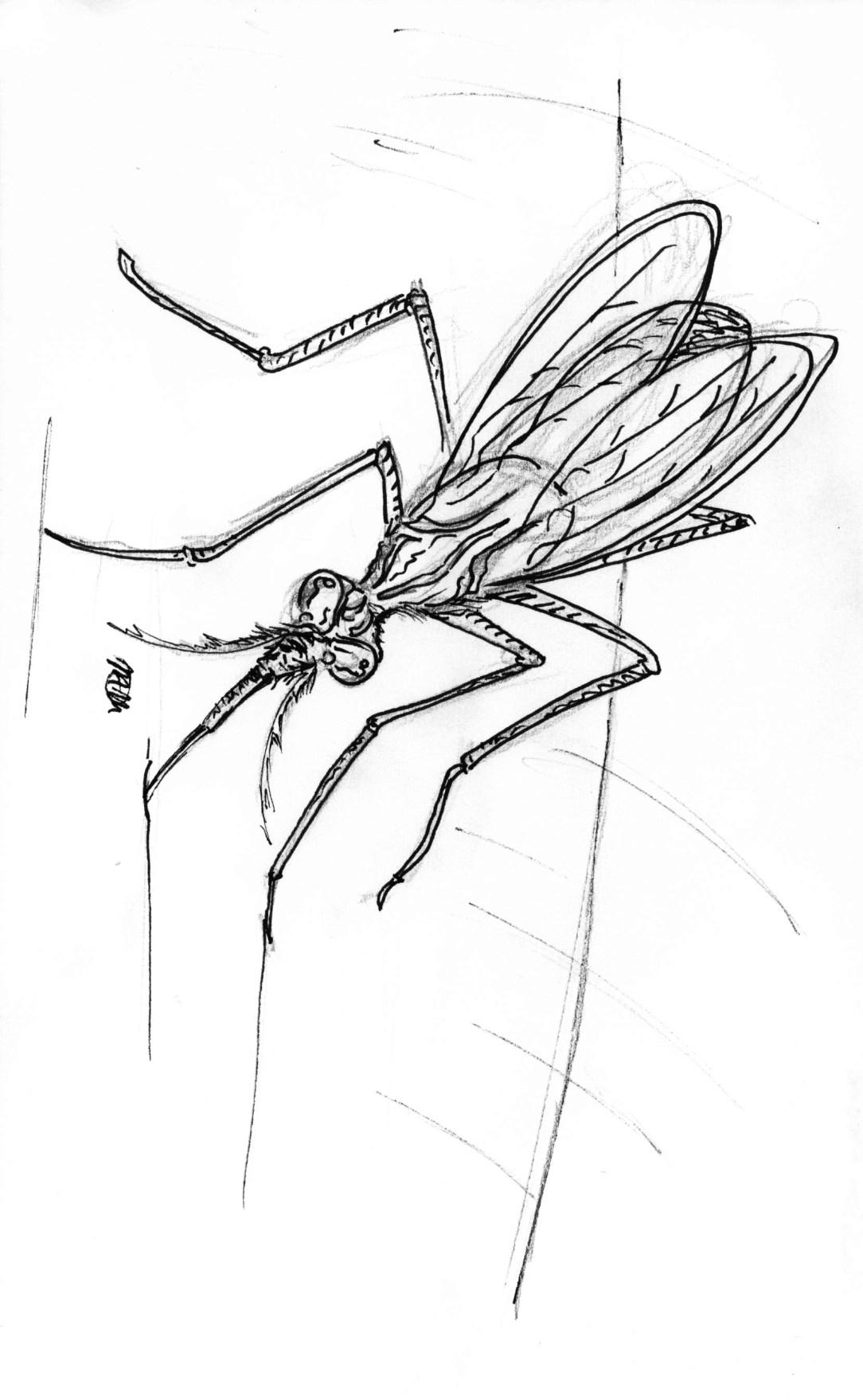 Mosquito Online