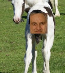 Carl Paladino face pasted on a foal's behind