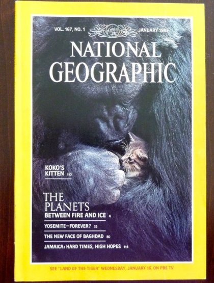 National Geographic cover from 1985 featuring Koko, a gorilla, holding a kitten