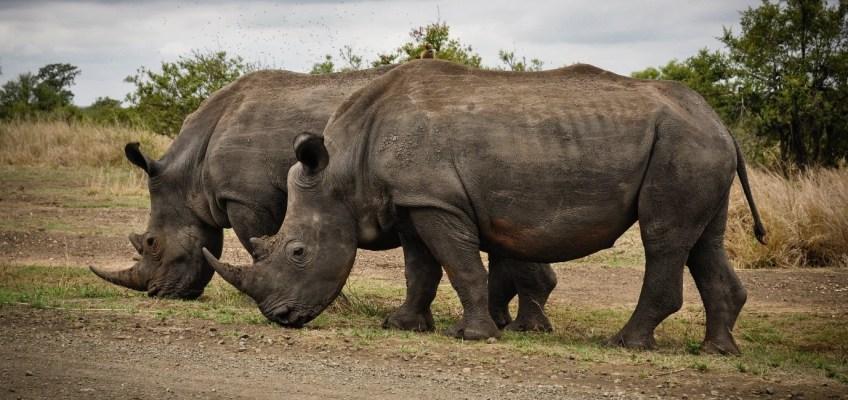 Africa's Best Safaris