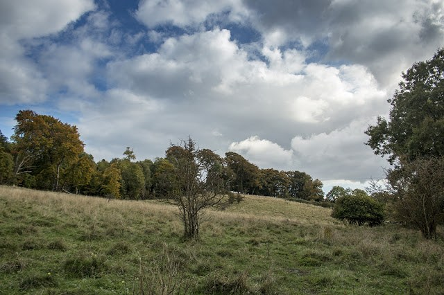 Aldbury Nowers Nature Reserve