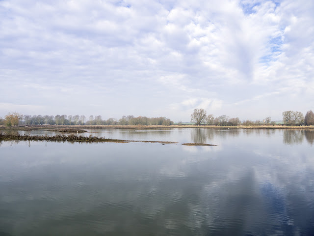Glassy Waters of the Floodplain Forest