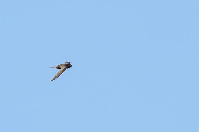 Common Swift 2