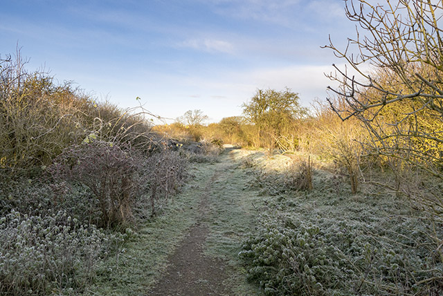 Frost at the Old Lock
