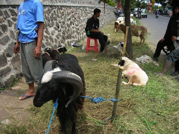 Sale of sacrificial animals on roadsides (such as the one in Java, Indonesia) are a common site in Muslim countries around the world ahead of Eid-ul-Fitr. (Photo by Ikhlasul Amal)