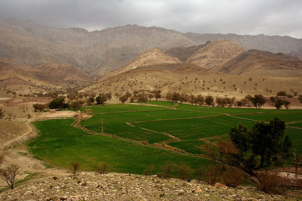 Wheat fields in the Surkhrood district of Nangarhar province. (Photo by United Nations)