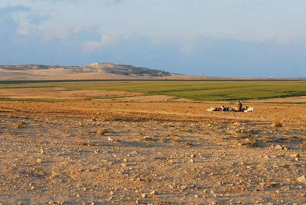 Goat Herding in the Negev Desert. (Photo by Thomas DeClerk, Creative Commons License)