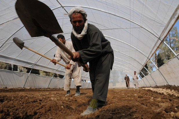 A man tamps down soil inside a newly completed greenhouse at the Farah director of agriculture, irrigation and livestock's facilities in Farah City. (Photo by isafmedia, Creative Commons License)