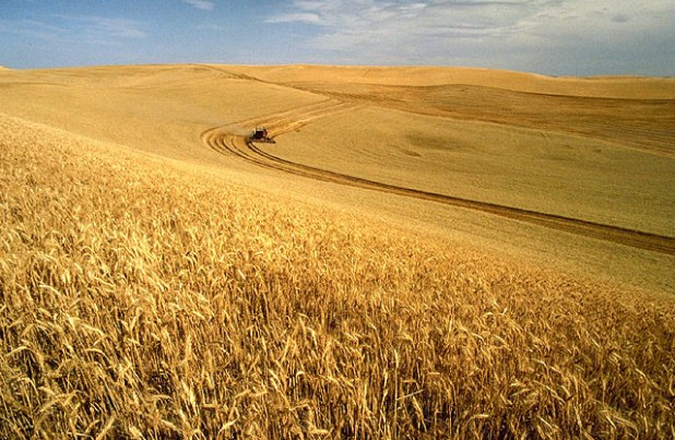 Decreasing agricultural yields per acre due to climate change could increase pressure for the conversion of more acres of native grasslands to agriculture lands. (Photo by  Scott Bauer via USDA, Creative Commons License)
