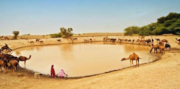 Thar desert, Pakistan. (Photo by Ellma Shaikh, via Pinterest)