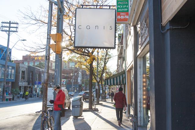 Canis Toronto