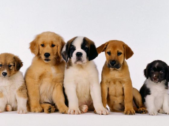 group of cute puppies lined up beside each other