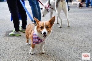 Park and Bark Dog Show