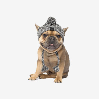Canada Pooch Polar Pom Pom Hat - View the VIBE