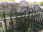 Wisteria and Storage under the street