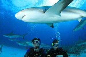 Bahamas_Sharks_02