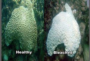 Coral_Bleaching_Before_After