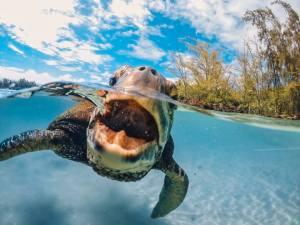 GoPro turtle