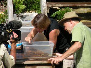 abaco island croc