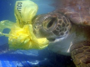 turtle_eats_plastic1
