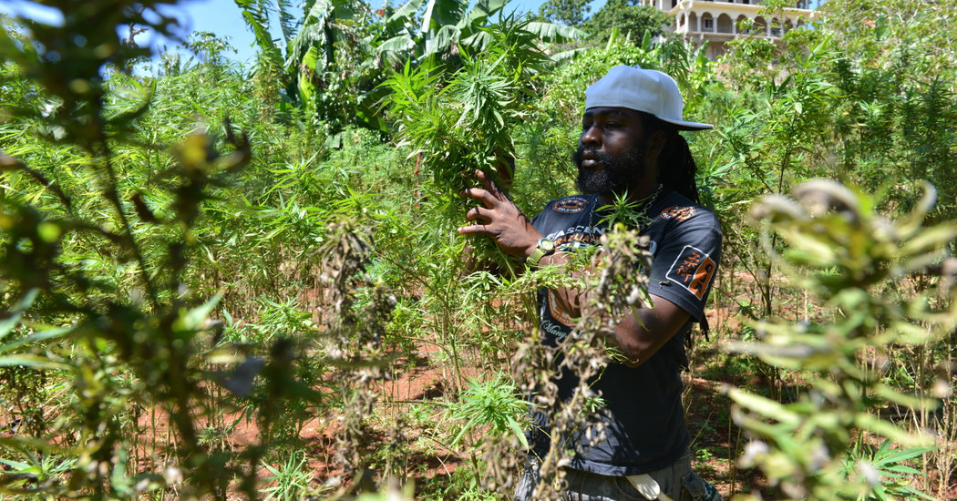 As Jamaica Looks To Cash In On Cannabis, Rastafarians Fear
