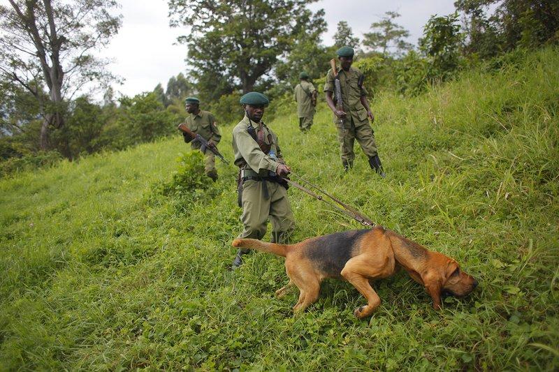 Seis guardabosques asesinados en el Congo