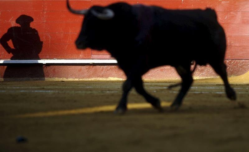 Alcaldía de Quito prohíbe espectáculos con sufrimiento de animales
