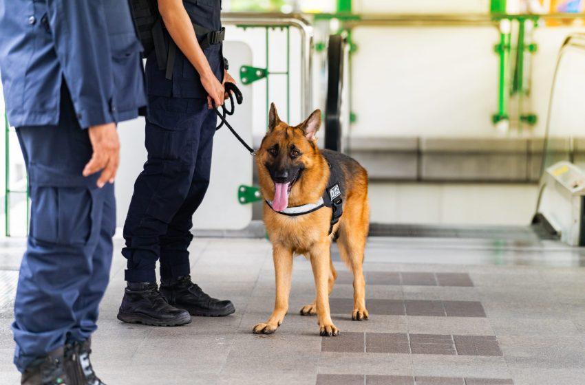 Emiratos usa perros como método rápido y no invasivo para detectar el Covid-19