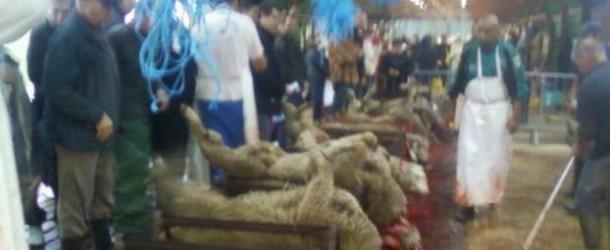 Aïd el Ahda cuvée 2013 : la preuve par Belfort