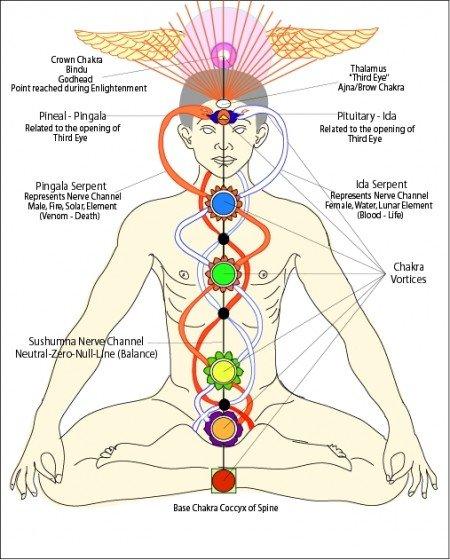 El caduceo como símbolo de la activación de chakras.