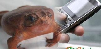 """Indotel informa que los celulares """"maco"""" deben ser suspendidos. (Foto: Genris García)"""