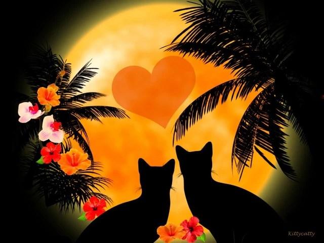 Image - Cats-honeymoon-hawaii-flowers-hibiscus-cat-cats ...