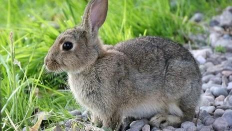 rabbit animal planet s