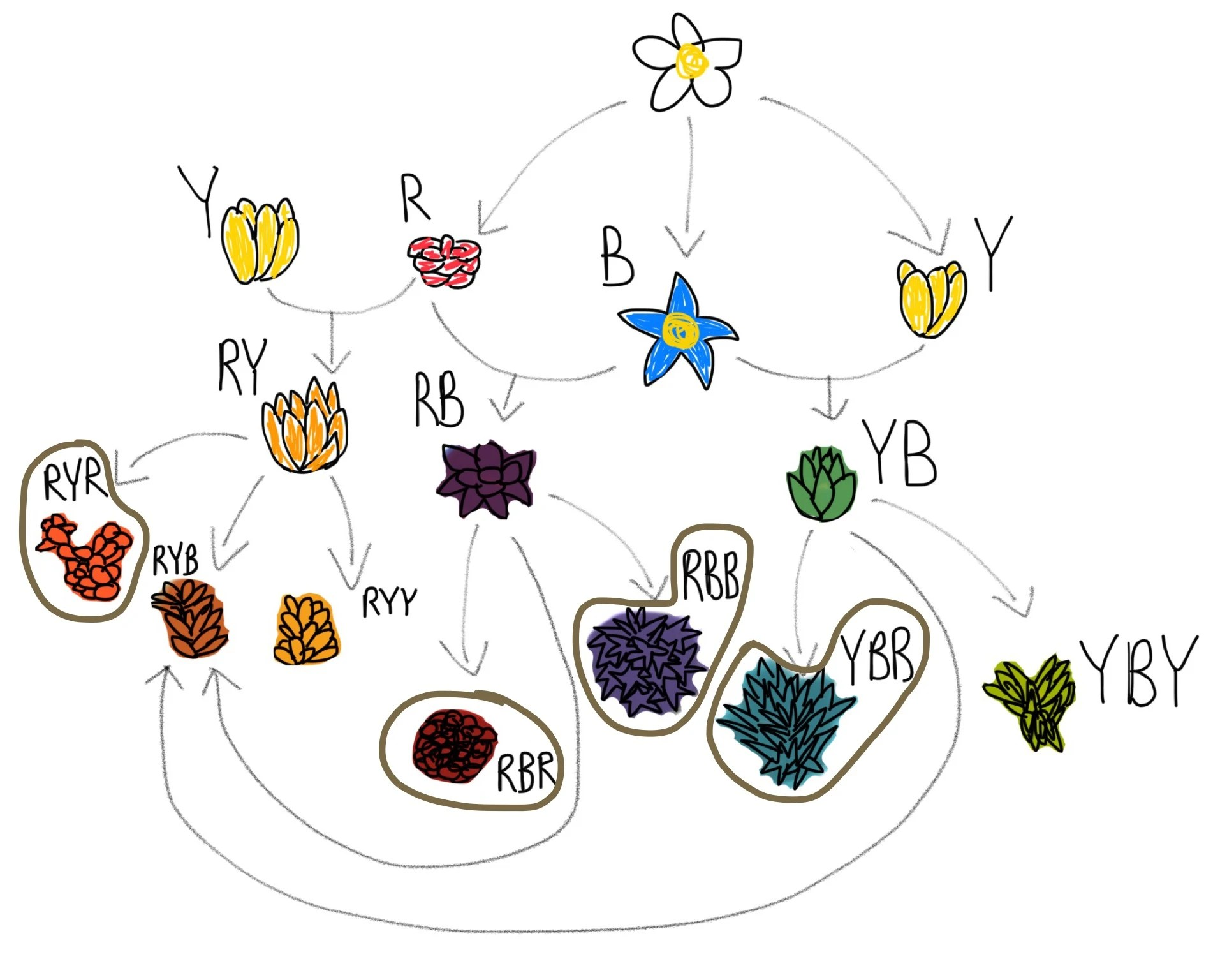 medium resolution of flowerdiagram