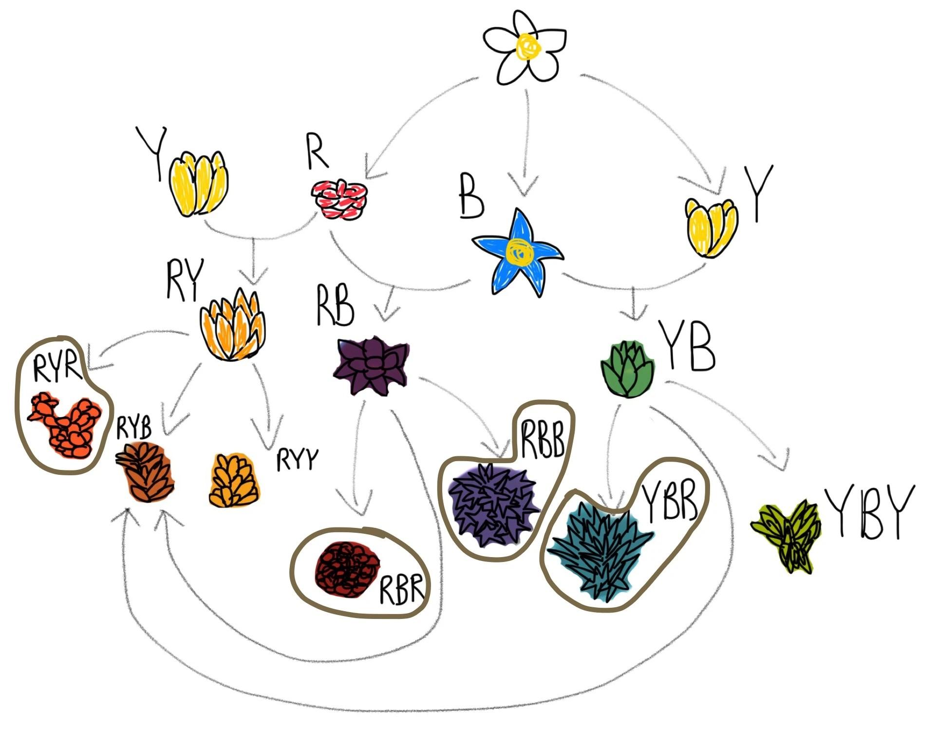 hight resolution of flowerdiagram