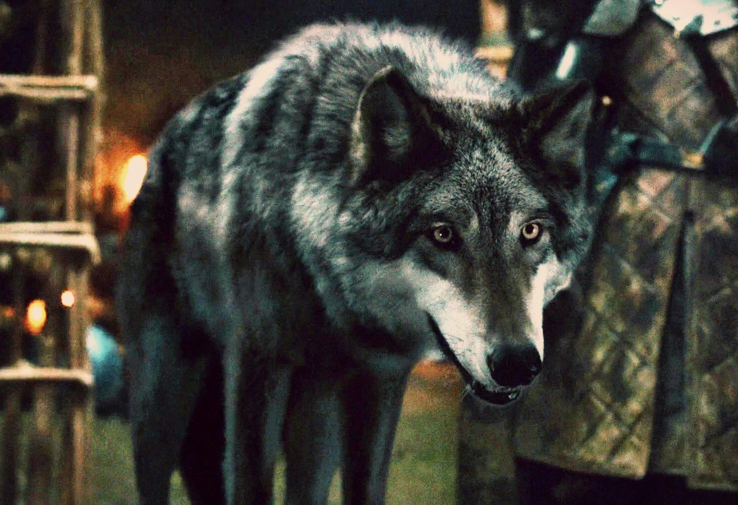 direwolves game of thrones