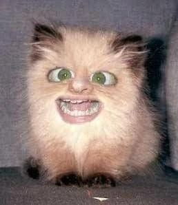 fax the cat noobpasta