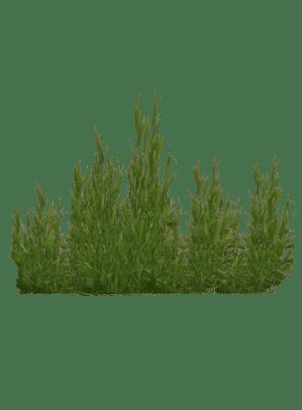 Seaweed Cat  Juicy  ZT2 Download Library Wiki  FANDOM
