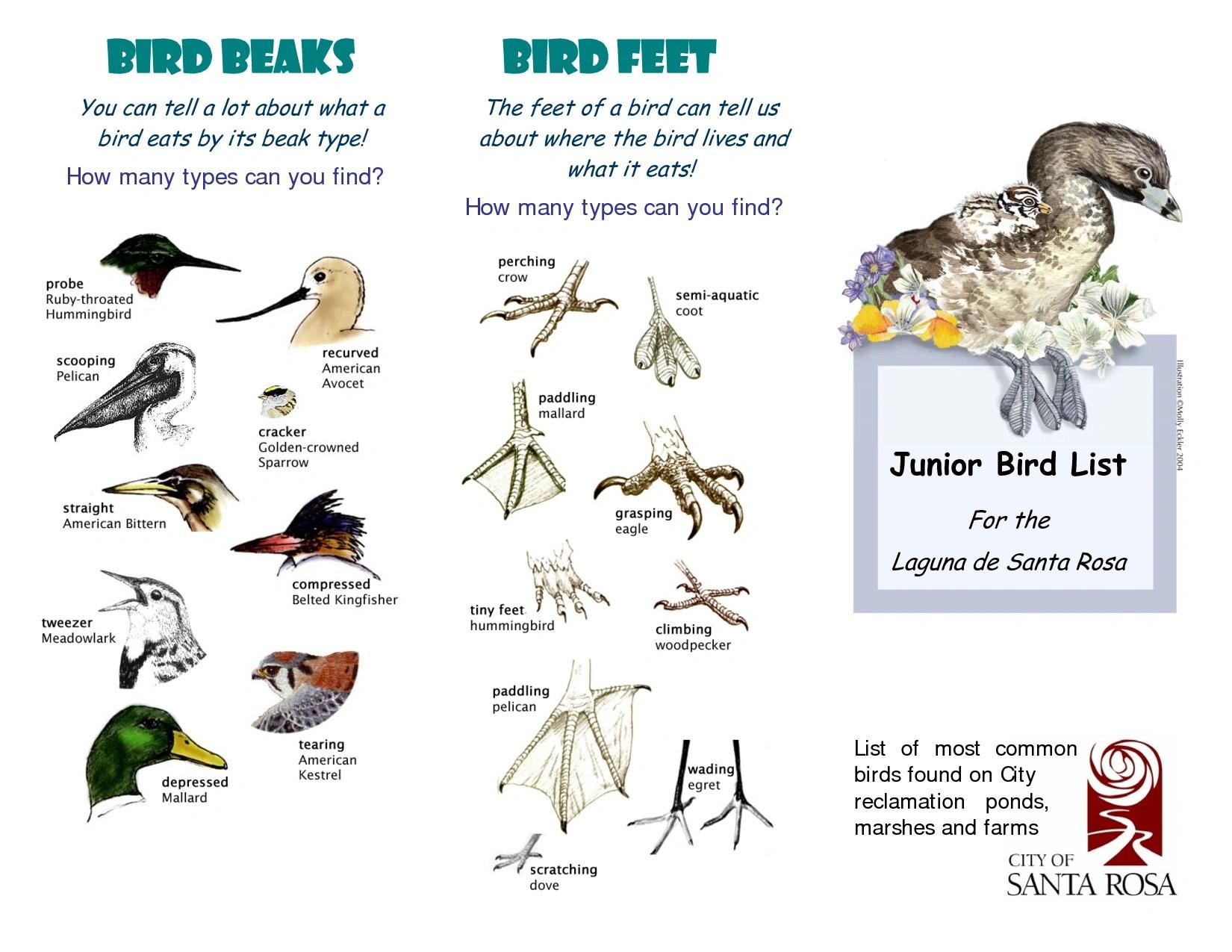 Birds Beaks Adaptations