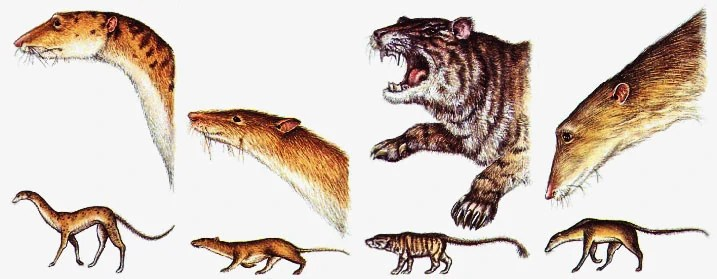 Predator Rats Speculative Evolution Wiki Fandom